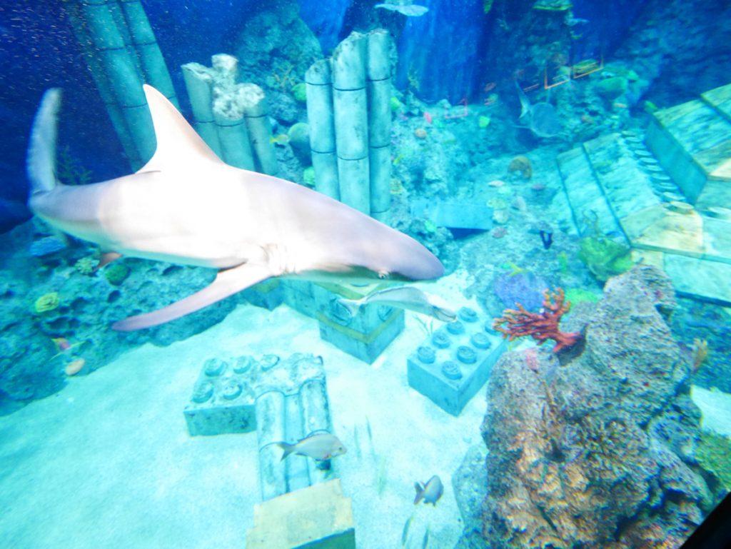 レゴランドSubmarine Adventure(サブマリン・アドベンチャー)から見えたサメ